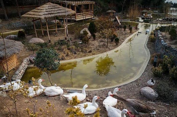 فاز اول باغ پرندگان قم تابستان امسال به بهرهبرداری میرسد