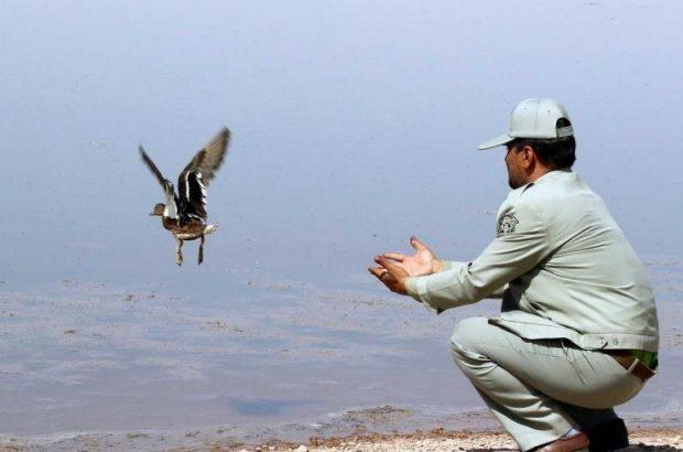 رهاسازی ۱۰ پرنده وحشی در دامان طبیعت استان قم