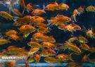 جمعآوری غرفههای عرضه ماهی و تزئینات نوروزی