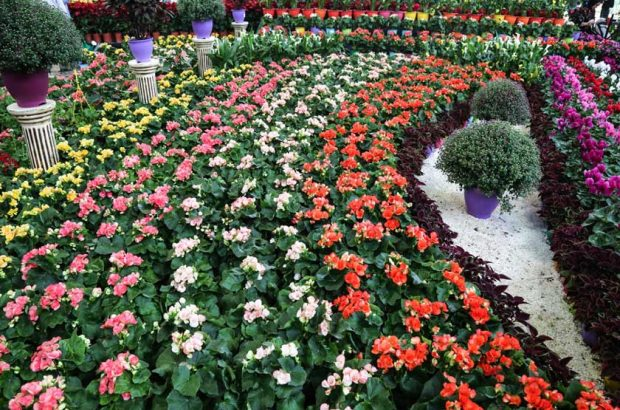 استقبال چشمگیر قمیها از نمایشگاه گل و گیاه