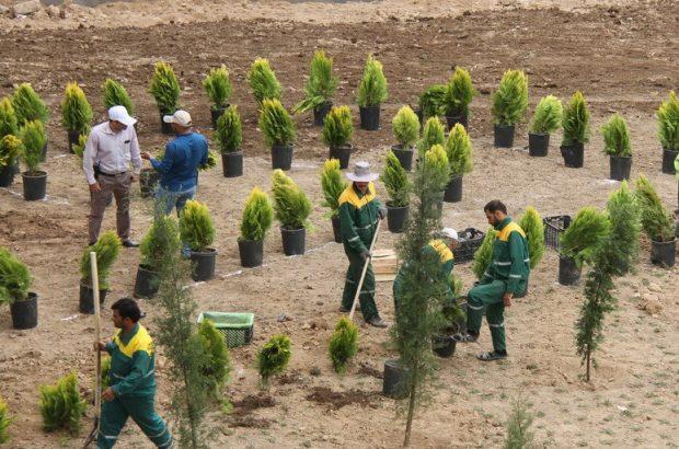 کاشت بیش از ۴۰۰ هزار اصله درخت و درختچه مثمر و دارویی در قم