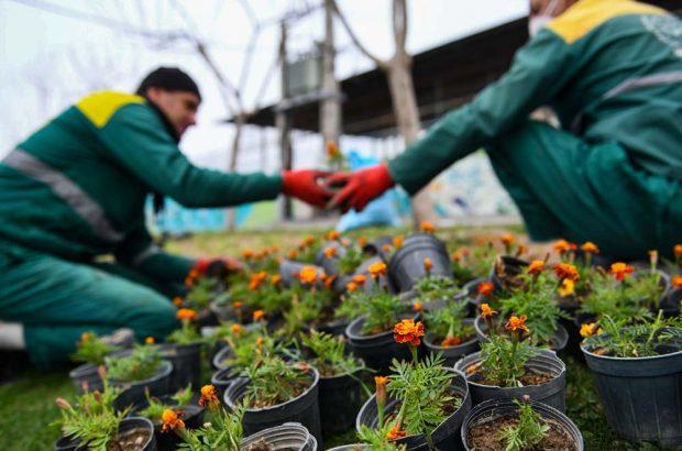 تحول در توسعه فضای سبز قم مشهود است/ فرهنگسازی بین مردم برای کاشت گل در منازل