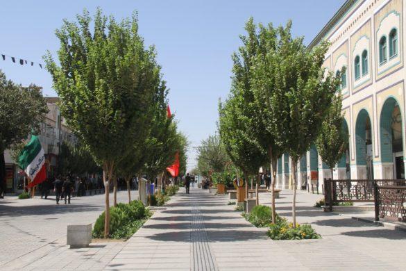 قطع درختان آلوده و ناایمن در خیابان انقلاب/ کاشت درختان چندساله در پیادهراه انقلاب
