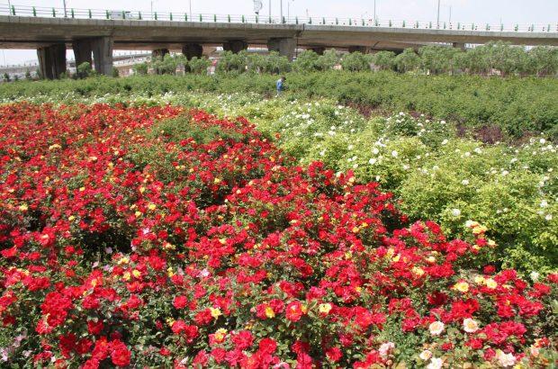 ۷۰۰ هکتار فضای سبز در منطقه دو وجود دارد/ تلاش برای ارتقای شاخصهای فرهنگی و رفاهی در منطقه