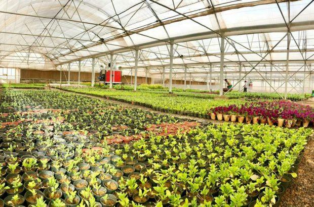 تکمیل خط سراسری انتقال آب به فضای سبز/ قم پیشتاز تولید گیاهان زینتی