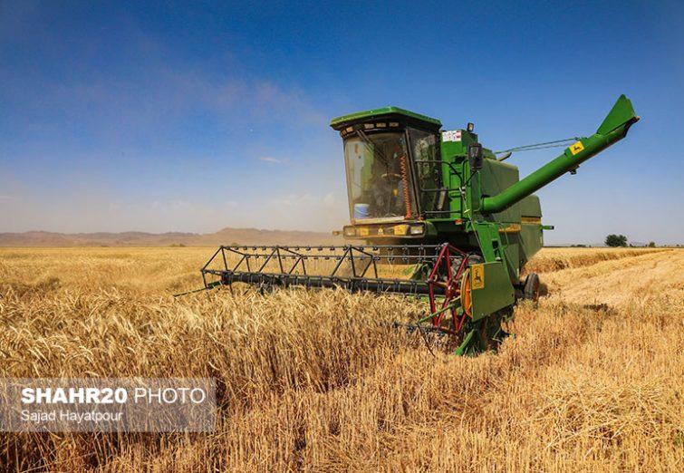 تصاویر/ برداشت گندم از مزارع قم