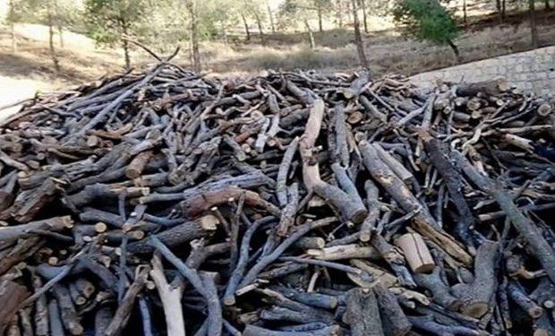 کشف ۷۹ اصله درخت جنگلی و بیابانی قاچاق در قم