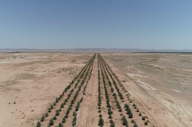احیای زمینهای آلوده با کاشت گیاهان سبز