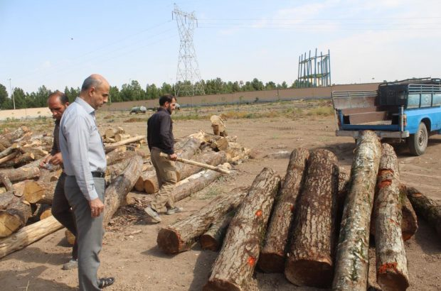 کشف ۹۴ اصله درخت قاچاق در قم