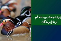 بازدید خبرنگاران از باغ پرندگان قم