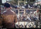 طرح نظارت و جمعآوری پرندهفروشان در شهر قم اجرا میشود