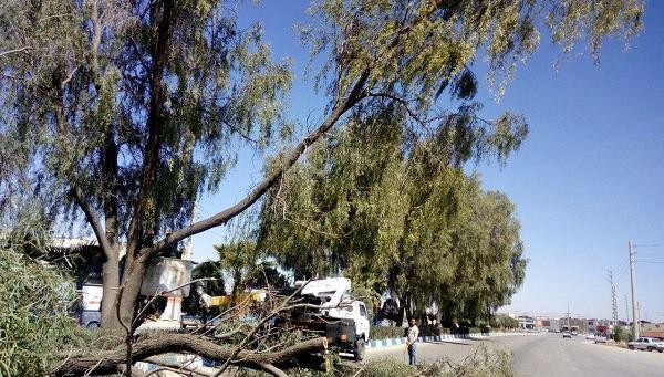 ساماندهی و ایمن سازی ۴ هزار درخت خطر آفرین در سطح شهر