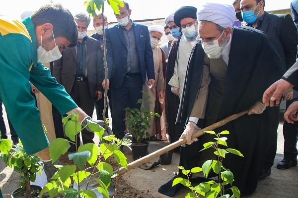 کاشت درخت وظیفه عمومی است/ دسترسی آسان شهروندان به فضای سبز