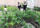 توزیع ۷ هزار اصله درخت مثمر در روستاهای دهستان قمرود و قنوات