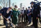 غرس نهال توسط استاندار قم بهمناسبت روز درختکاری+ تصاویر
