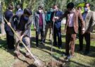 آیین روز درختکاری با حضور خبرنگاران قم برگزار شد +تصاویر