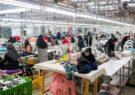 روایت «خانم ایرانی» از کارآفرینی در خانه تا صادرات به عراق