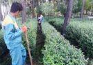 برگزاری کارگاه آموزشی هرس پرچین در فضای سبز شهری