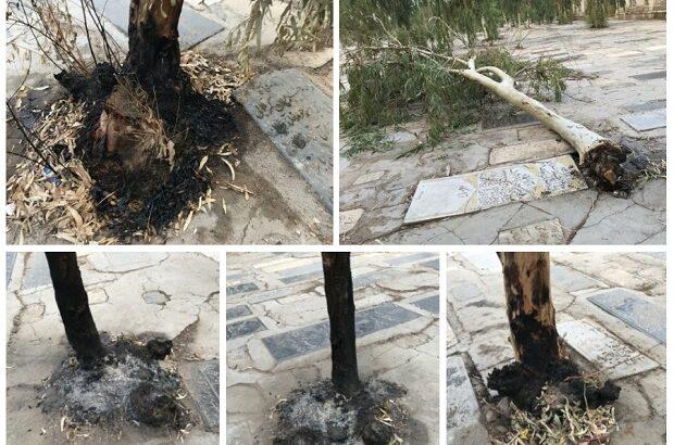سوزاندن پایه درختان قبرستان نو در قم