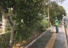 افزایش مبارزه با آفات نباتی فضای سبز قم